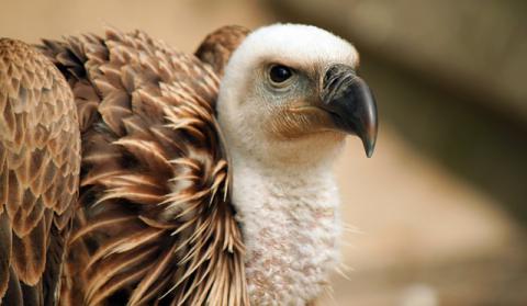 Linkedin Avvoltoi